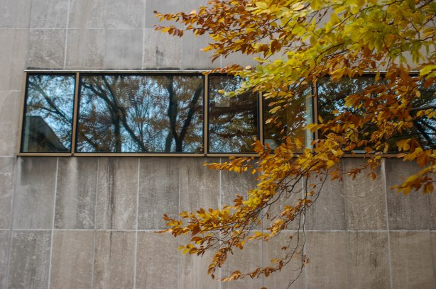 part of a tree branch with autumn leaves in front of a concrete University of Toronto building that has a horizontal line of windows that reflect other trees and leaves.