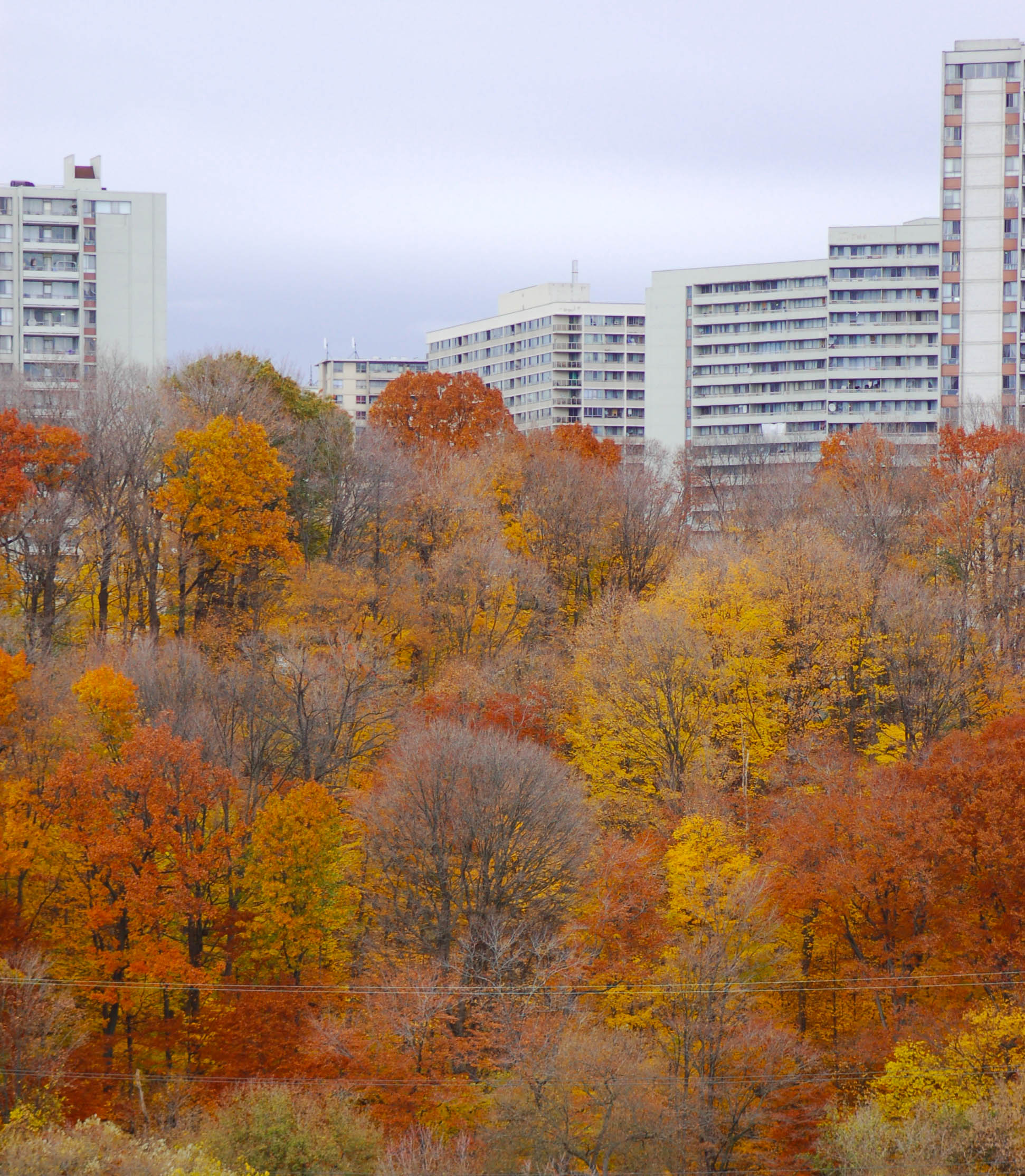 Bayview West Apartments: Autumn In The City, 2012