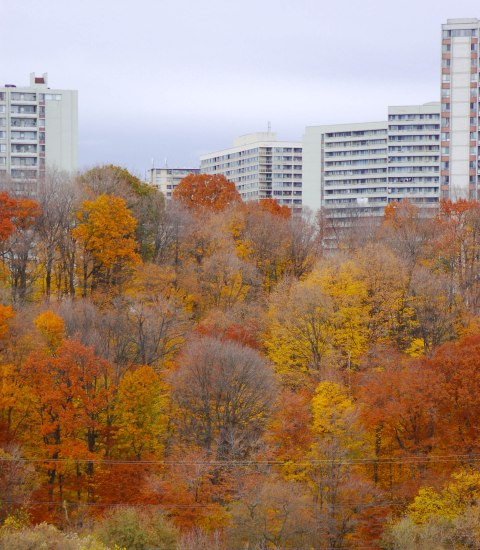 many trees in the foreground. a few have lost all their leaves while others still have yellow, orange, and rust coloured autumn leaves. Four large high rise apartment buildings are in the background.