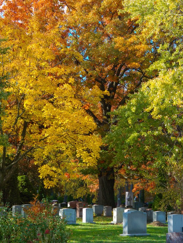 tombstones in Mount Pleasant cemetery under tall trees with brilliant yellow leaves, as well as other autumn colours.