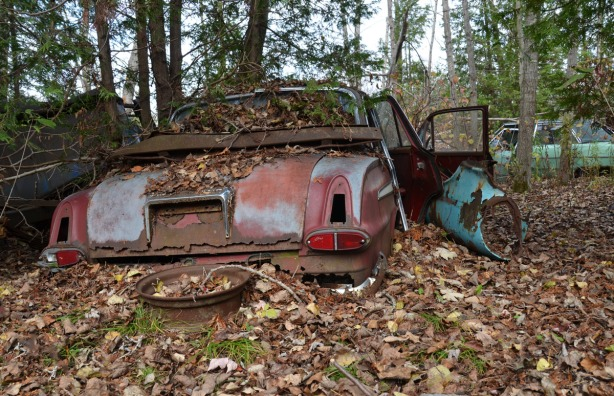 A rusty old car in the woods. Its doors are open.