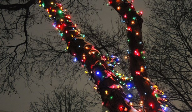 Two tree trunks wrapped in strands of multi-coloured Christmas lights are in the foreground.  In the background are  bare tree branches against the sky.  The sky is a grey colour because it is a cloudy winter night.