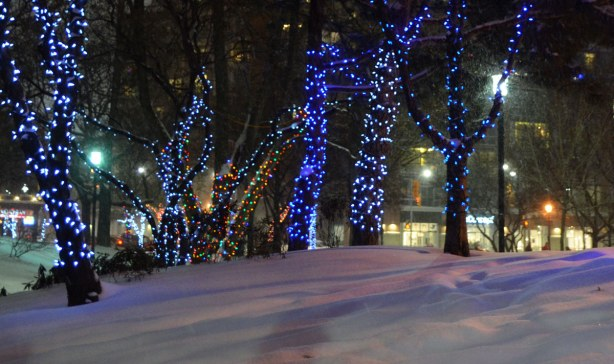 Six trees with their trunks wrapped in strands of Christmas lights.  There is a fresh, deep layer of snow on the ground.