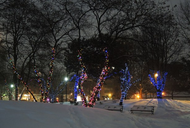 snow covered benches under trees whose trunks are wrapped in strands of Christmas lights.