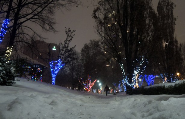 A snow covered path through a park.  The tree trunks have been covered with Christmas lights.  A couple of trees have blue lights, a couple of trees are covered with white lights, and some trees have multi-colored lights.