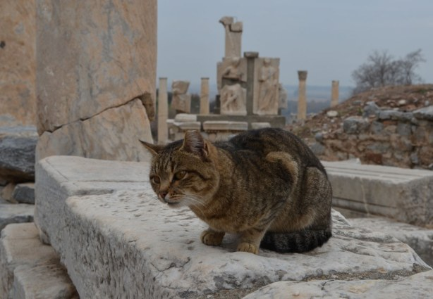 Cat, Efes Turkey, amongst the ruins