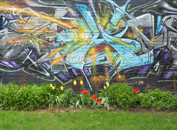 Tulips and other spring plants starting to grow in front of a wall that has been painted with graffiti