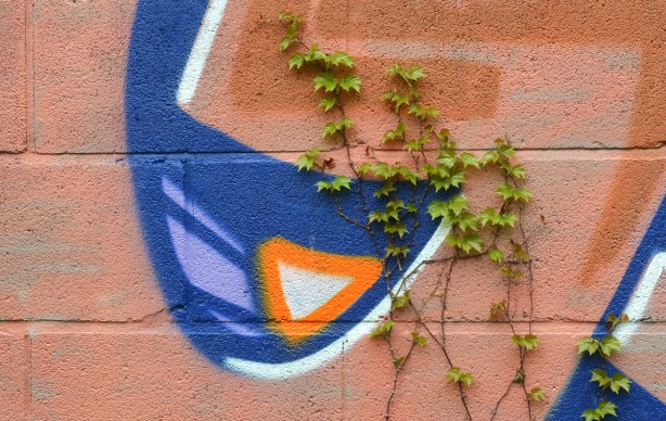 Ivy begins to grow again on a wall that has been painted with beige, blue and orange graffiti.   Close up picture of the graffiti so it looks like an abstract shape