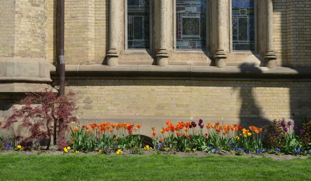 A row of orange tulips growing in front of St. James cathedral.  Close up of the building so only part of one wall, with lower corner of a window, can be seen.