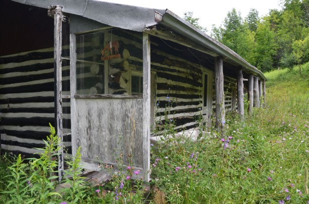 The back of a one storey structure, once a house, now abandoned and neglected.  It was a log cabin with an overhanging roof at the back.  The yard is overgrown with wildflowers and weeds