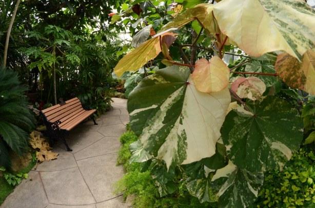 blog_plant_bench