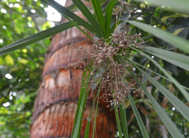 blog_plant_tree
