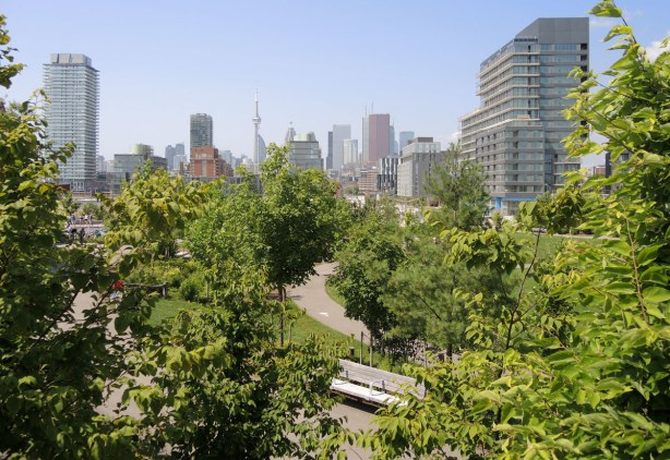 small trees and other greenery , with a path and bench in the middle, in the foreground and the Toronto skyline is in the background.
