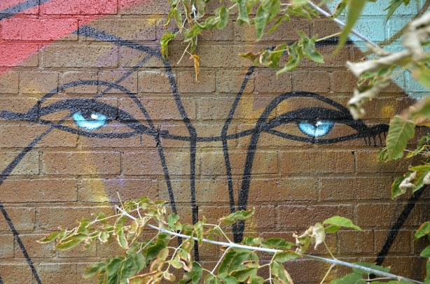 The eyes of a graffiti face look like they are peaking from behind a couple of branches.