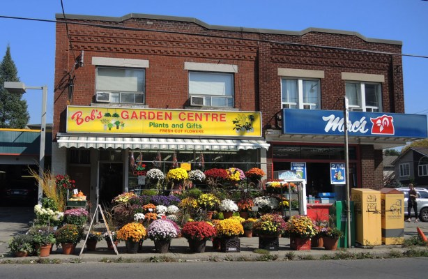 A storefront, Bobs Garden Centre, with four rows of large potted plants, colurful flowers, for sale.