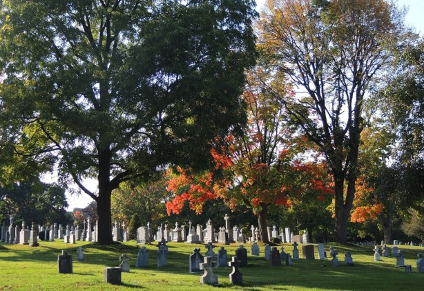 Trees with autumn foliage in a cemetery with lots of light grey  tombstones