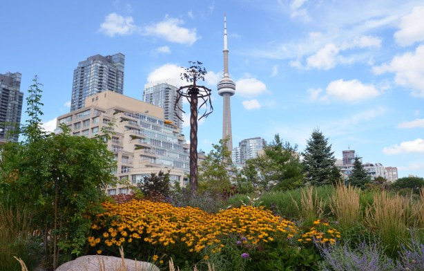 Black eyed Susan flowers in the foreground, some taller buildings including the CN tower in the background.  There is also a tall thin sculpture (decorated pole?) in the picture