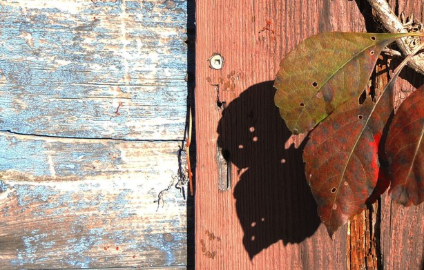 close up of a few leaves and the shadows that they make on a orangish wood wall.