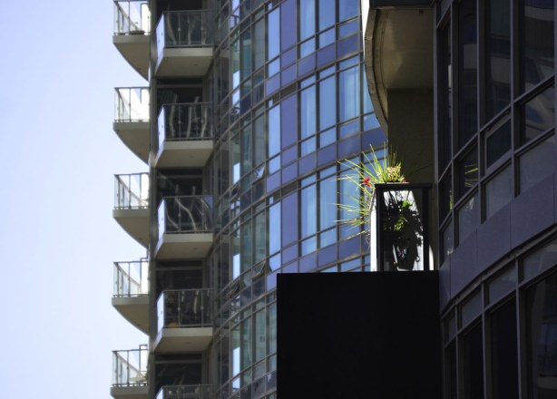 Two tall condo buildings.  Sun is reflecting off the balconies of the condo in background.  In the foreground is a balcony with a large plant.  Sun is shining directly on the plant so it looks like it is in a spotlight.