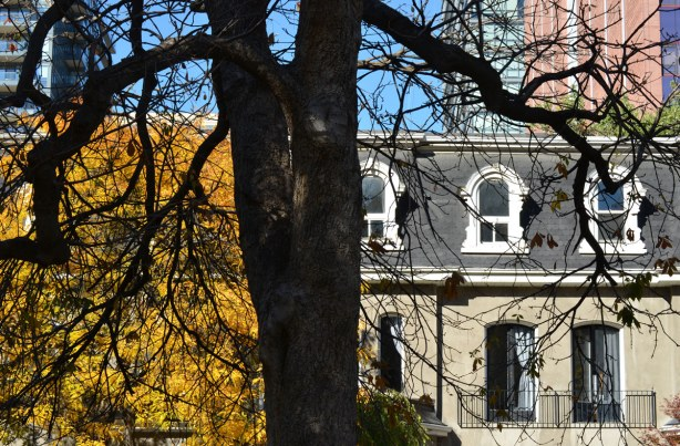 older row houses in the background along with a tree covered in yellow and gold leaves.  A large tree that has already lost its leaves is in the foreground.