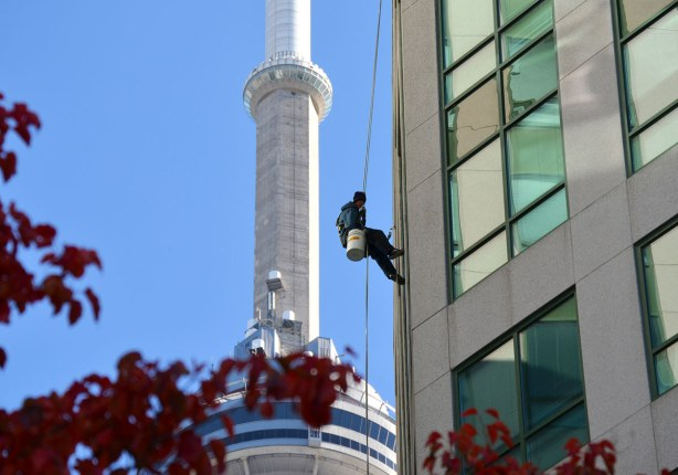 A man is suspended from the roof of a tall building by a rope.  He has a bucket and he is washing windows.  The CN Tower is close by and seems to loom in the background.