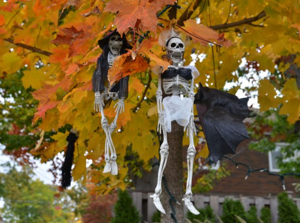 Skeletons hanging from branches of a tree in a frontyard.