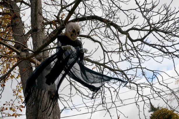 Skull & hand bones attached to some wispy black fabric makes a wonderful scary flying phantom when hung in a tree on a breezy day