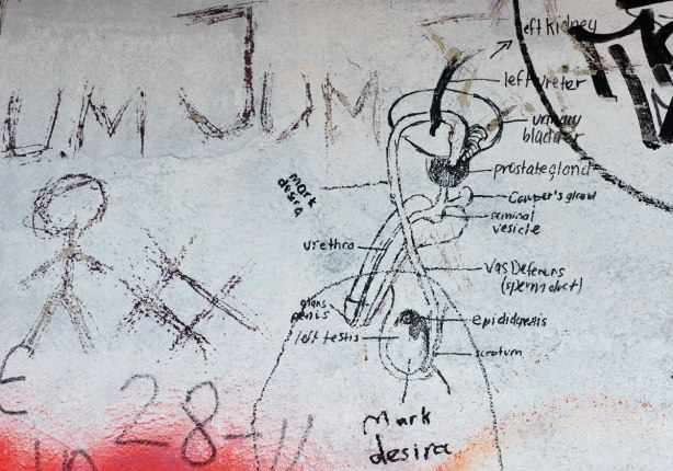 graffiti on a wall - black drawing on concrete of the male reproductive system, with labels