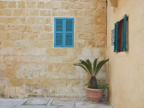 Potted palm plant growing in the corner.  Two windows in the building both with bright blue shutters.