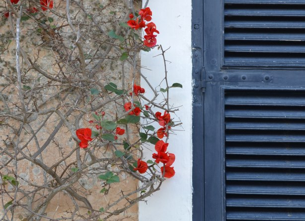 Part of a dark blue shutter on the right surrounded by a white window frame.  On the left is a red bourganvillia flower plant growing up the side of a limestone building.