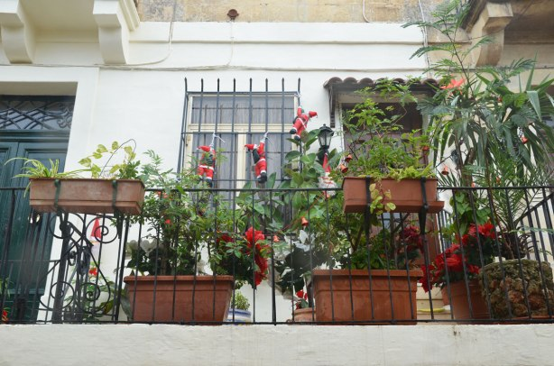 Many small SAnta Claus decorations are climbing up the bars of a balcony.  The balcony has a lot of plants on it too.