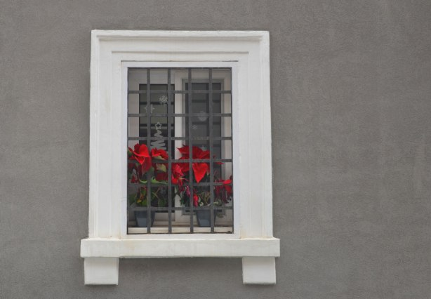 A window with a large white window frame on a dark grey wall.  The window has metal bars on it.  Between the bars and the glass are two red poinsettias.