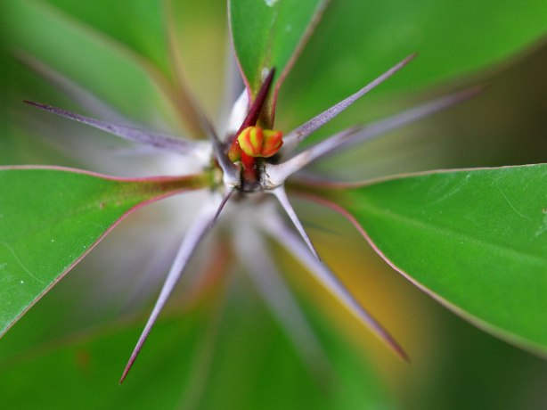 close up macro photo of a bud on the end of a thorny stem