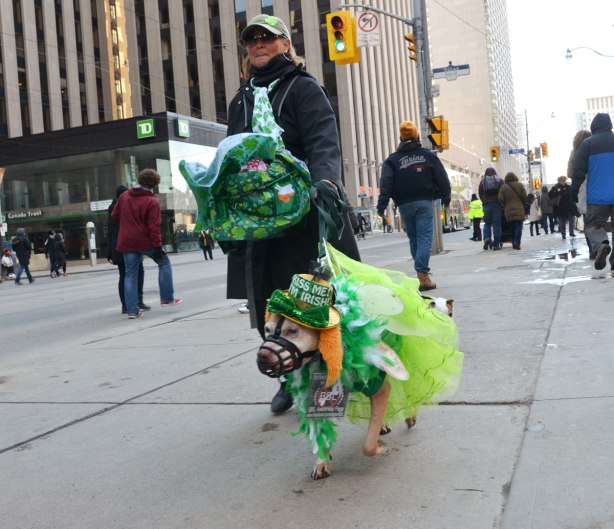 "A woman walking a dog that is all dressed in frilly green.  It's also wearing a hat that says ""Kiss me I'm Irish""."