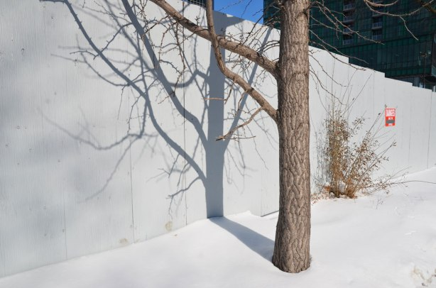 The lower part of a tree, mostly the tree trunk, beside a pale grey fence, in the snow.  The shadow on the fence shows a lot of the upper tree branches as well.