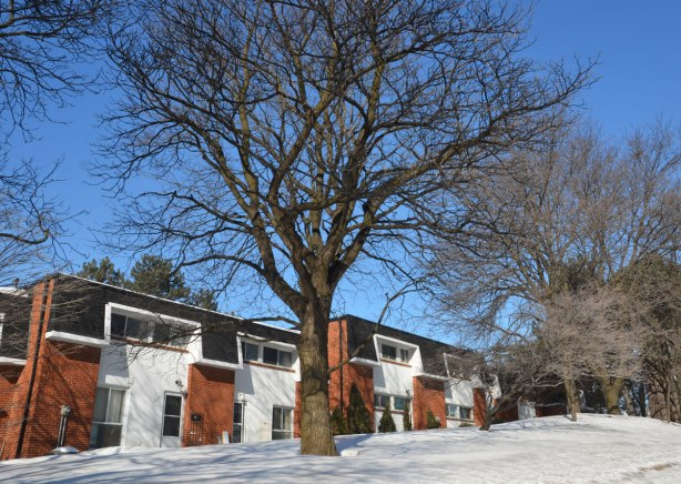 A large tree with bare branches in front of row houses from the 19602 or 1970s.  red brick with contrasting white siding, black mansard roofs.  Don Mills.