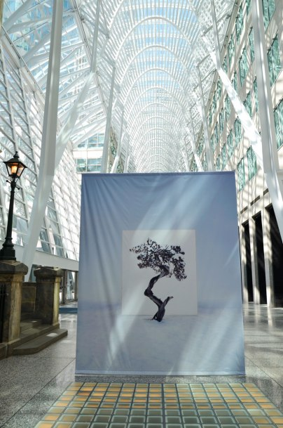 large banner with a photograph of a tree against a white background hangs in Brookfield Place with its high rounded glass and white steel ceiling.