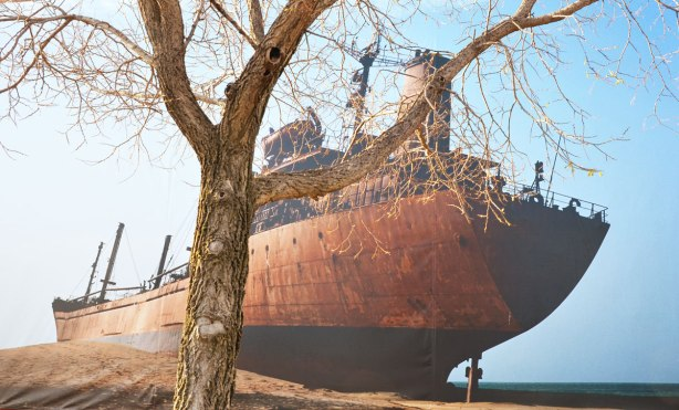 A large photograph by Zineb Sadira of an old ship that lies rusting on the shore.  A tree is in front of the photo.  Although it is rusting, the ship is intact.