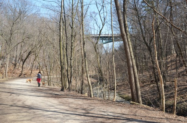 trail beside a creek in a ravine with lots of trees in early spring before there are any leaves on the trees.  A woman is walking two dogs on the trail and in the distance there is a bridge over the ravine.
