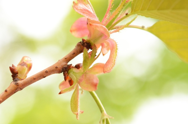 close up of new growth, new leaves, on a branch of a flowering tree