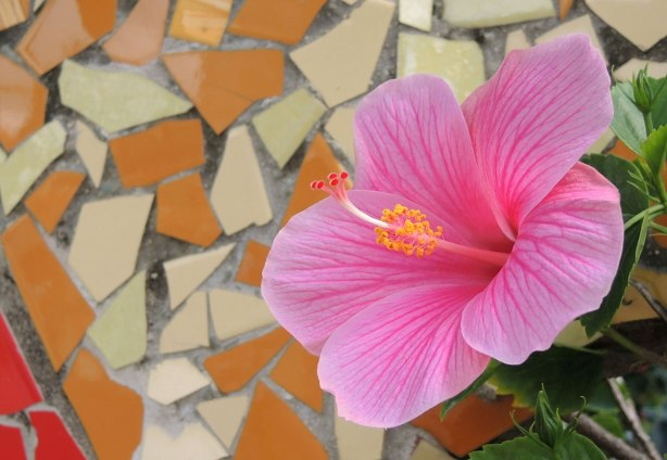 pink hibiscus flower in front of a beige and orange mosaic