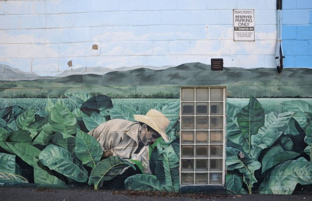 Mural of a man in a white hat leaning over and picking tobacco plants in a field of tobacco.