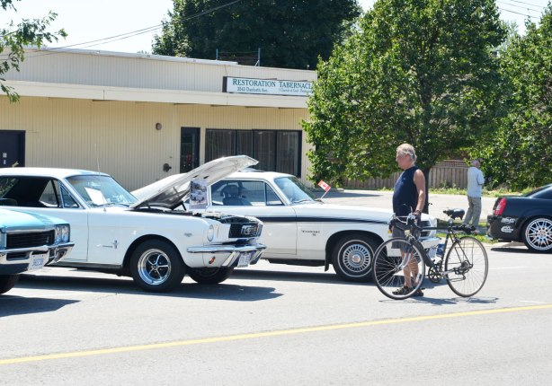 picture taken at a car show - a Man walking his bike stops to look at two white cars from the 1970's that are on display. One of them has its front hood open. One of the cars is a Ford Mustang