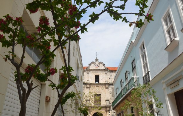 picture taken in the old part of the city of Havana Cuba - a bourgainvillea vine in the foreground with buildings including a church in the background