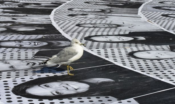 A seagull stands on photos of people that are glued to the concrete