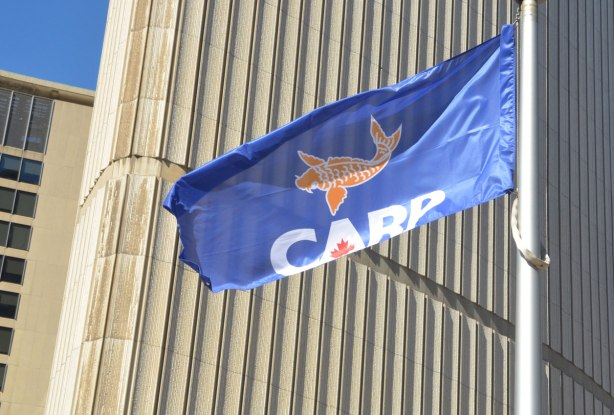 The blue flag of CARP (Canadian Association of Retired Persons) flies in front of Toronto city hall. It has an orange coloured carp fish on it with CARP underneath in block white capital letters. There is a red maple leaf in the center of the A