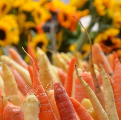 heirloom carrots for sale at an outdoor market, reddish, orange, and yellow carrots in the foreground, sunflowers for sale in the background