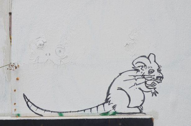 On a white wall, a black line graffiti drawing of a rat with a long tail.