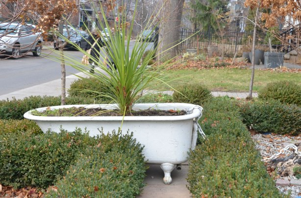 An old fashioned white bathtub in a front yard. It's been filled with dirt and is now used as a planter.