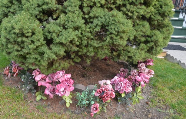 a ring of pink plastic flowers around the base of an evergreen shrub in a front yard